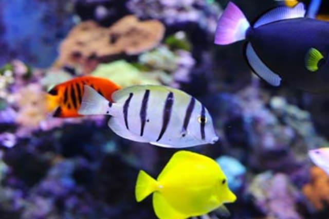 Falmouth Aquarium
