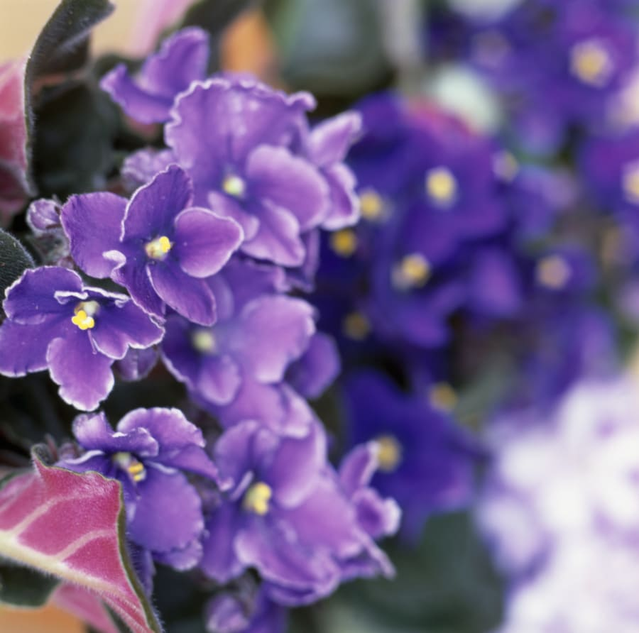 how to stop potting mix becoming water repellent
