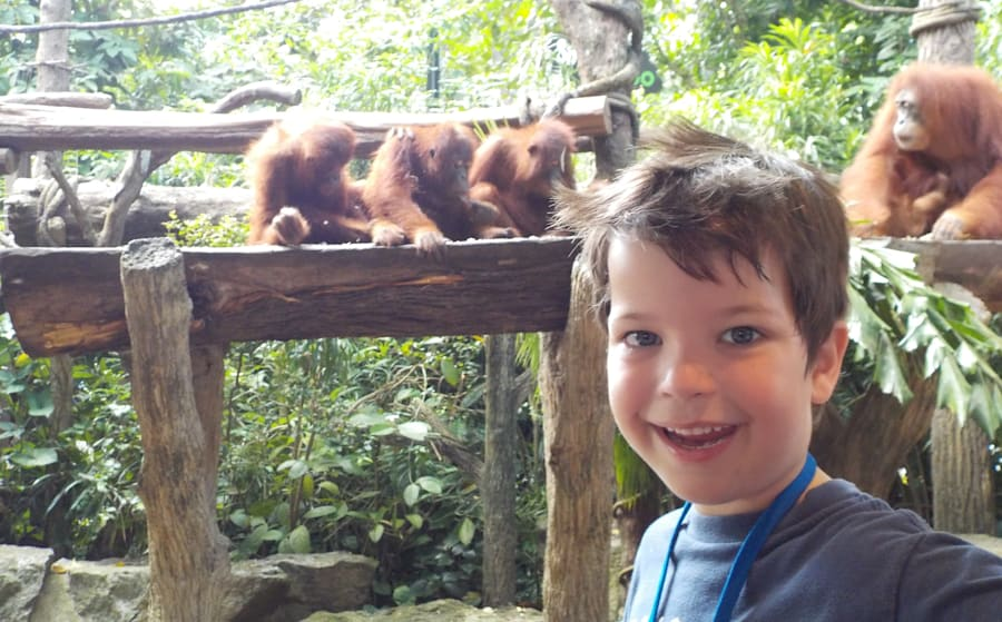 The tables manners were a bit iffy... but the orangutans were very