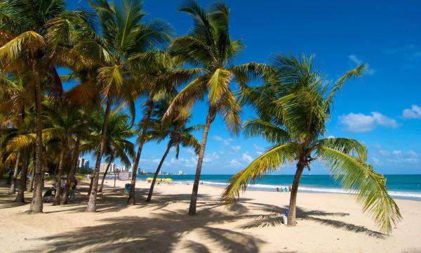 Puerto Rico, Caribbean, Greater Antilles, Antilles, San Juan, Isla Verde Beach, palm beach, palm beaches, sand beach, sand beach