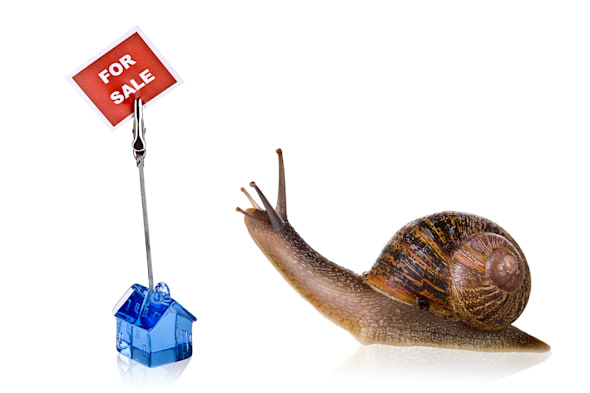 funny snail reading the sign...
