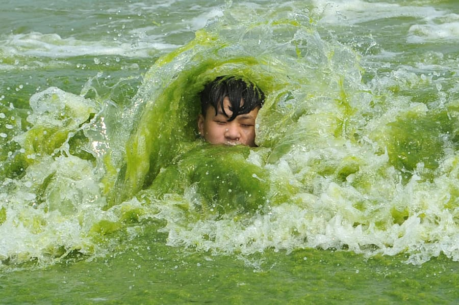 You shouldn't swim in an algae