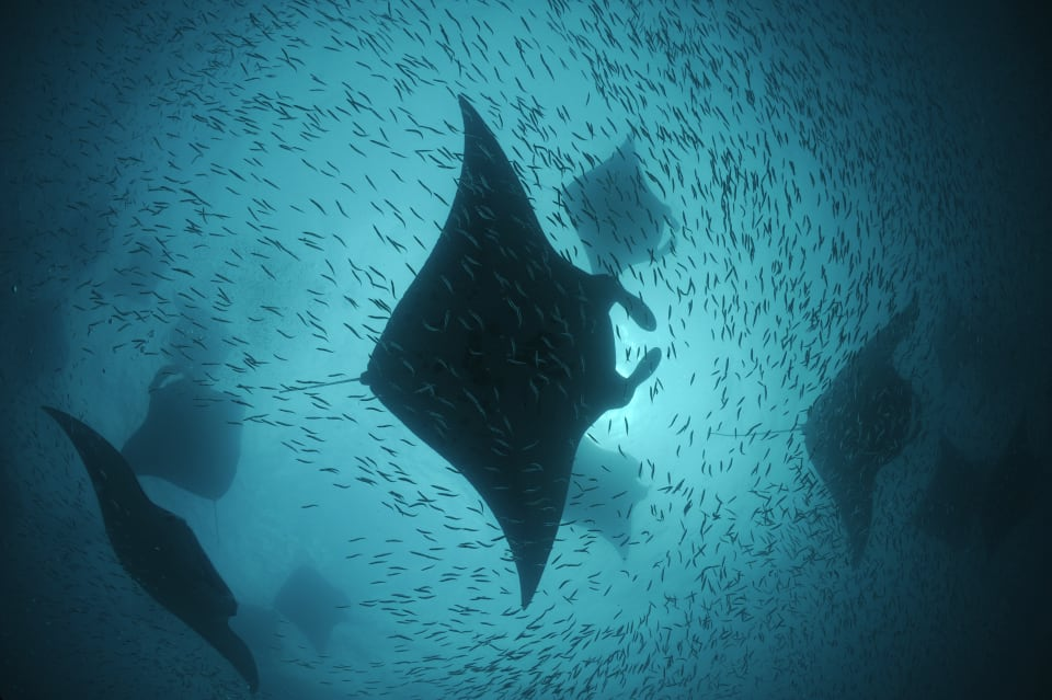 The world's oceans still have areas of incredible