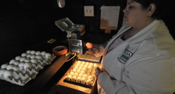 A USDA inspector examines shell eggs at Cal-Maine Foods in Green Forest, Ark., in 2010.