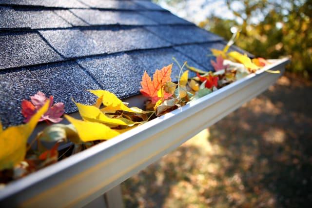 rain gutter full of autumn...