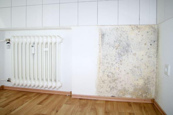 Mold growing on wall | bath, bathroom, bathtub, black, corner, damage, damp, dampness, destruction, dirt, dirty, effect, environ