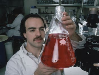Dr. Michael Giantini, scientist at Roche Institute of molecular biology, examining a tissue culture.