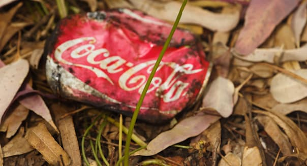 Old crushed Coca-Cola can laying on forest floor amongst leaves with single sturdy blade of grass growing from beneath it.