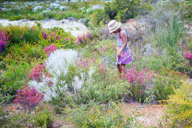 Girl walking through wildflowers, Jurien Bay, Western Australia