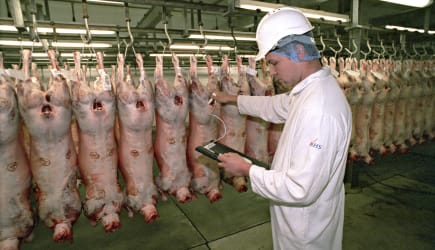 Government appointed meat hygiene service meat inspector at work in an abattoir checking the temperature of a carcase in the chiller room. This image may only be used to portray the subject in a positive manner