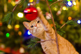 Cat playing with red Christmas ball with blur Christmas tree with lights in background.