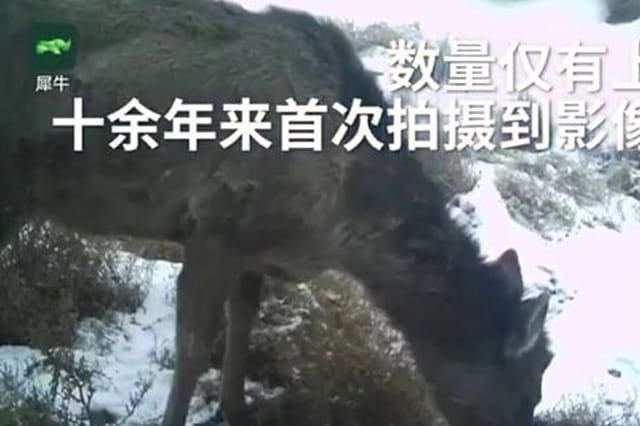 Horse or deer? What is this mysterious creature spotted in China?