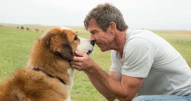 a dog's purpose, premiere, canceled, cancelled, controversy, video, boycott