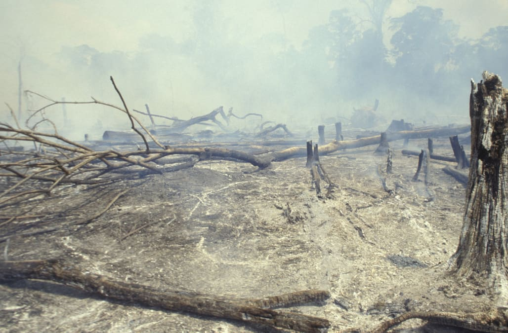 Amazon rainforest burning, forest clearance for cattle