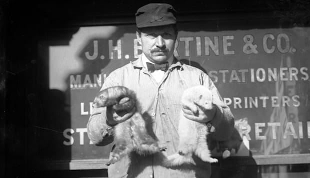 Rat catcher in America