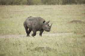 Black Rhino. Taken in Serengeti National Park, Kenya.Image lightbox: