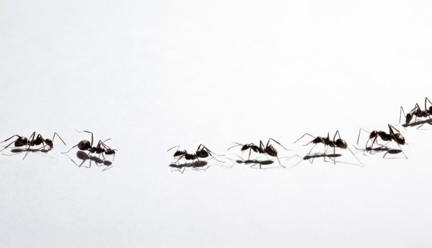 image of ant