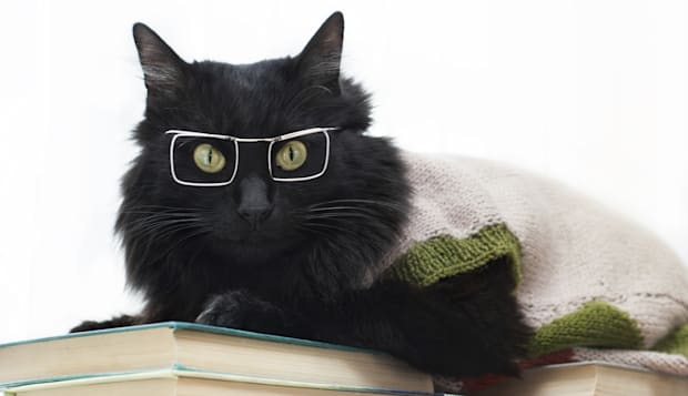 black cat with glasses lying on books