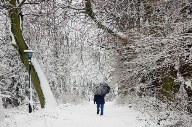 Walker In Hampstead Heath, UK