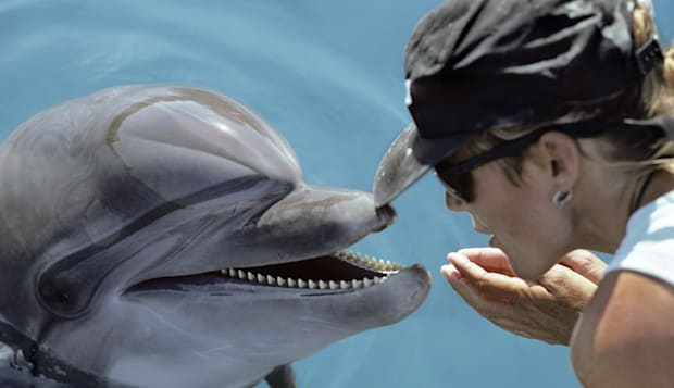 Dolphin trainer and Bottlenose Dolphin