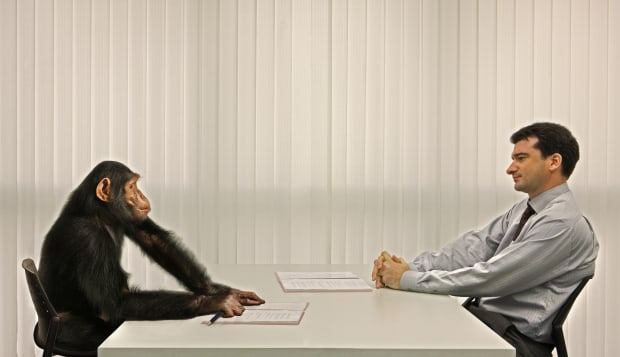 businessman and chimp having meeting