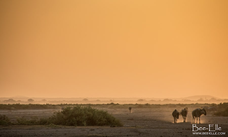 Droughts at the Maasai Mara have ensued due to a lack of rainfall and decreasing water flows from the...