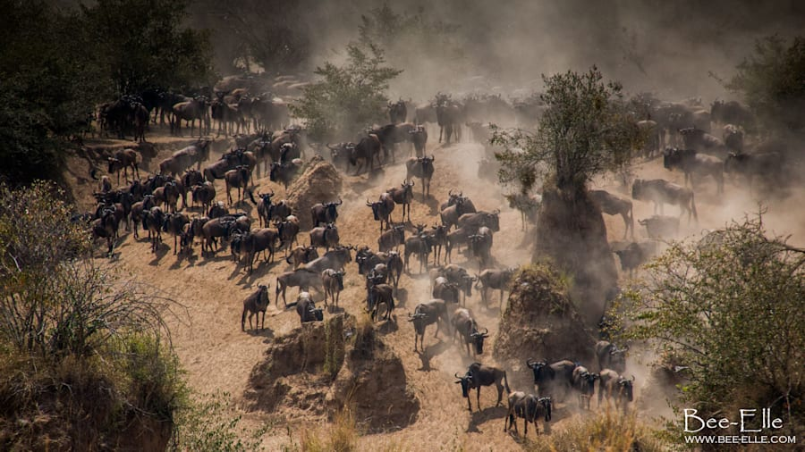 The Wildebeest Migration, declared one of the greatest wildlife shows on the planet, is under