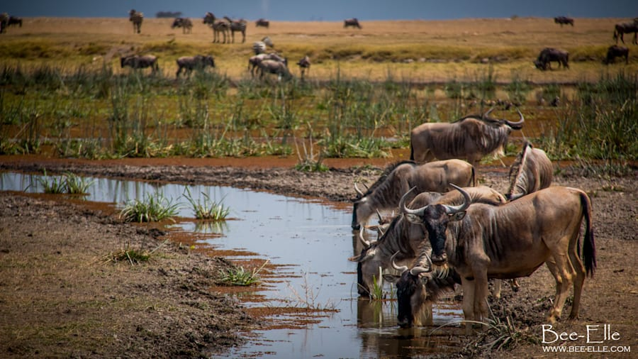 The Mau Forest, which feeds the Mara River, is rapidly shrinking, creating massive threats to the Serengeti