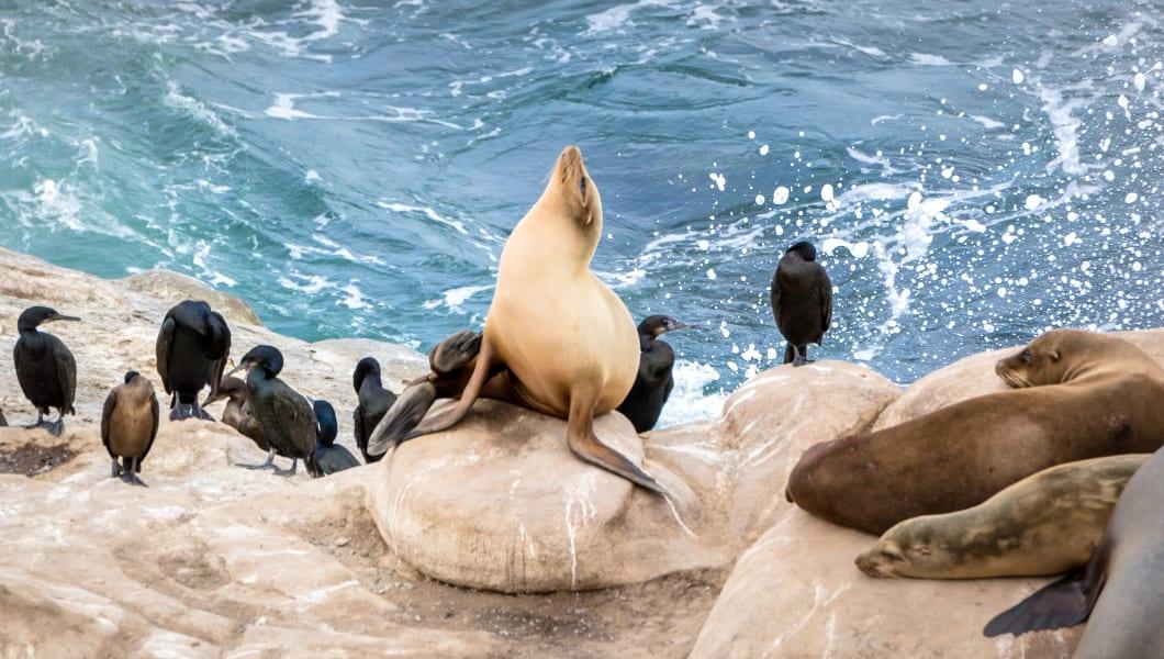Sea Lions at La Jolla Beach