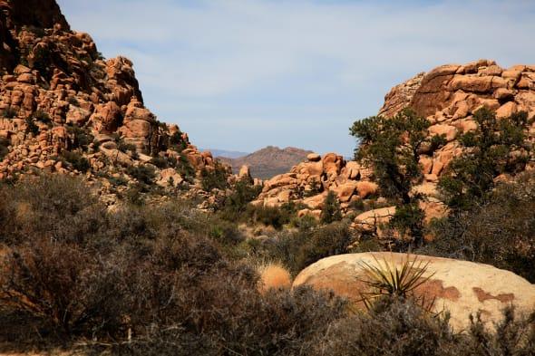 Joshua Tree National Park CA