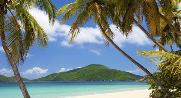 coconut palm trees at a tropical beach in Virgin Islands, the Caribbean