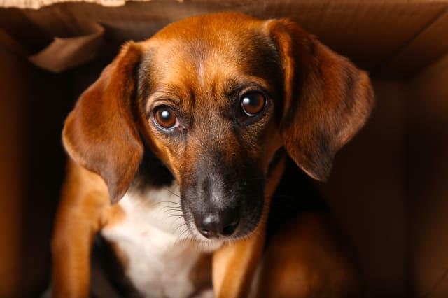 homeless mixed breed dog...