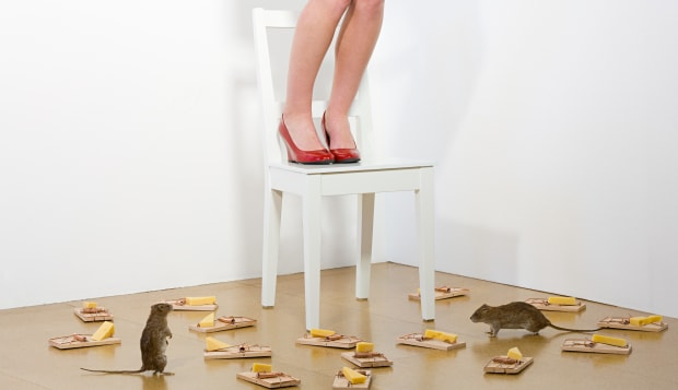 Woman afraid of rats