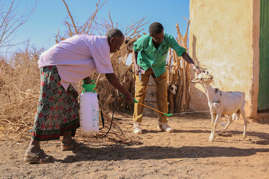 Somalia Is In Drought, But There's No Shortage Of