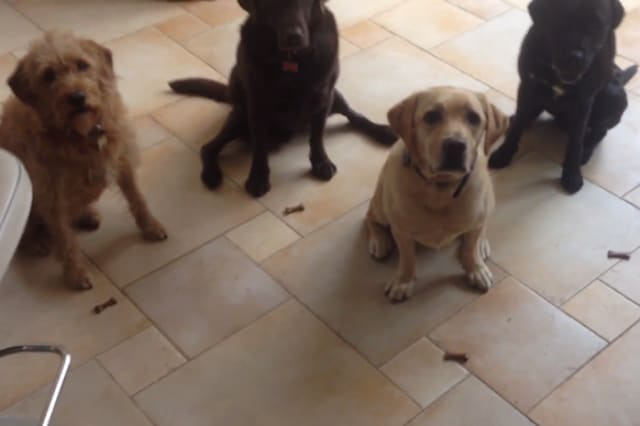 Dogs show amazing patience