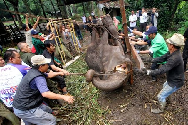 Shocking footage shows starving bears in Indonesian zoo