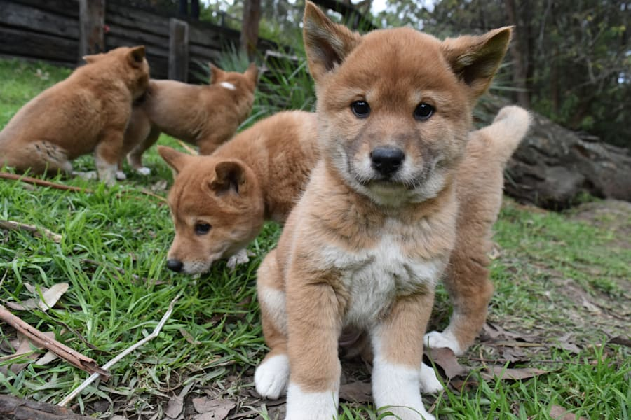 Four of the cutest pups on the block this