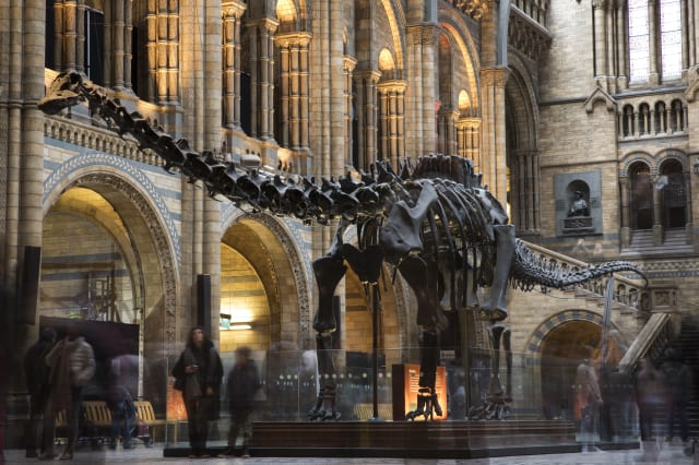 Last Day At The Museum For Dippy The Diplodicus