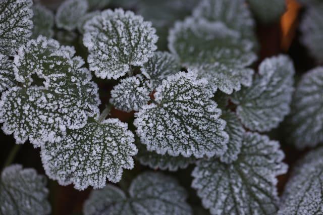 Health Warnings Issued As Freezing Fog Envelops The UK