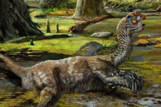 Dinosaur fossils found