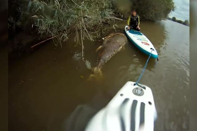 Shark sized tuna washes up in River Severn