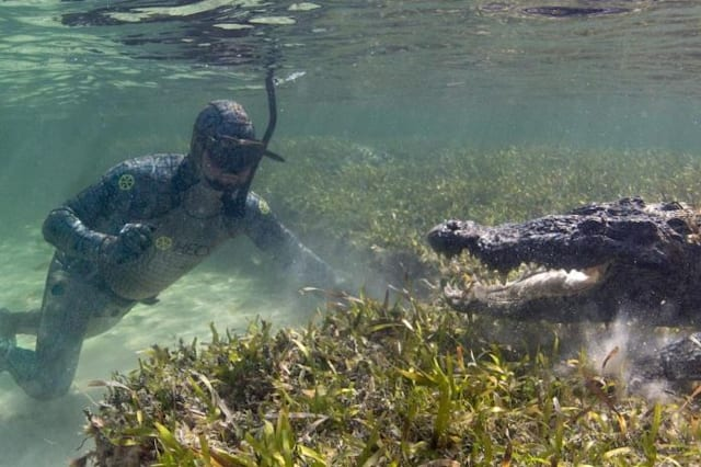 Unusual tactic used for filming crocodiles