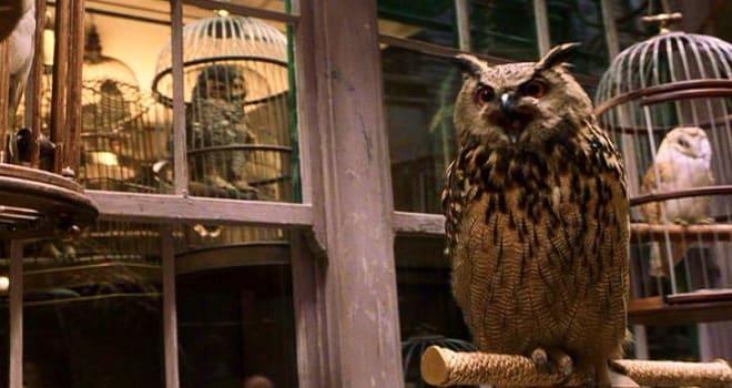 PETA Exposé Alleges Animal Abuse on Major Films, Including Harry Potter