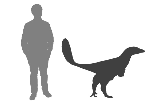 The Albertavenator weighed around 60kg and was about two metres