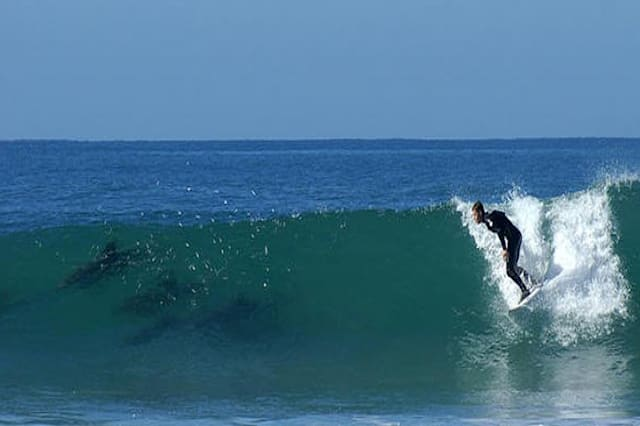 Dolphins break through water as surfers look on, South Africa