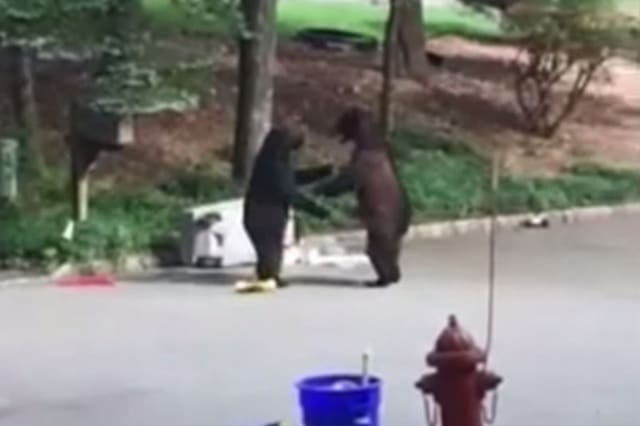 New Jersey bears fighting over rubbish can