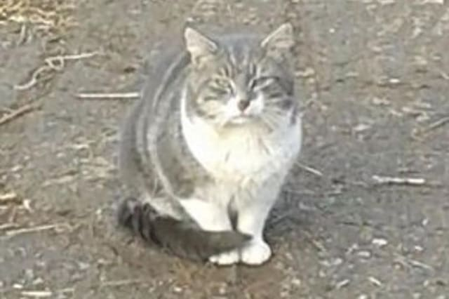 Villagers launch campaign to save stray cat