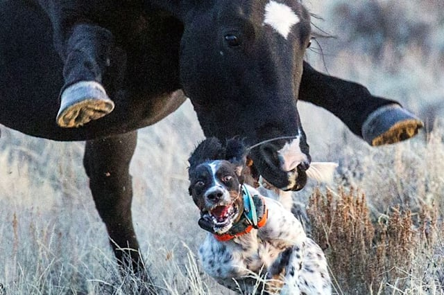 Amazing photos show stallion chasing dog