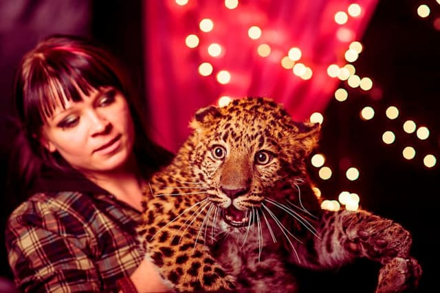 Circus leopard mauls woman protecting four-year-old