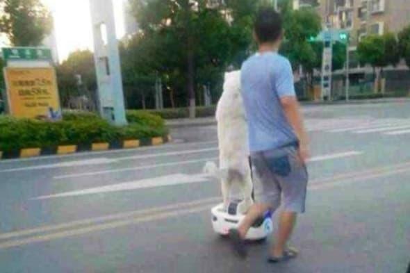 Dog rides segway in China@REX